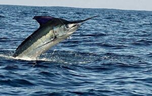 Nuevo Vallarta Fishing Charters in Bahia de Banderas and Riviera Nayarit