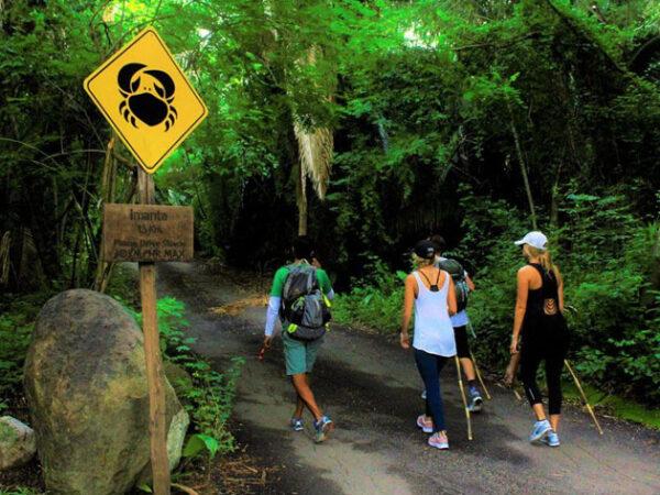 Hiking in Punta Mita Monkey Mountain